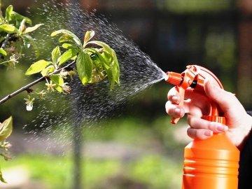 Как защитить плодовые деревья и кустарники от насекомых