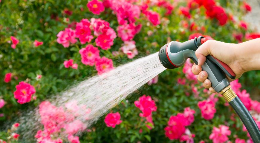 Как защитить сад и огород в засушливые периоды