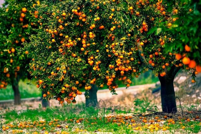 Как ухаживать за плодоносящими деревьями летом