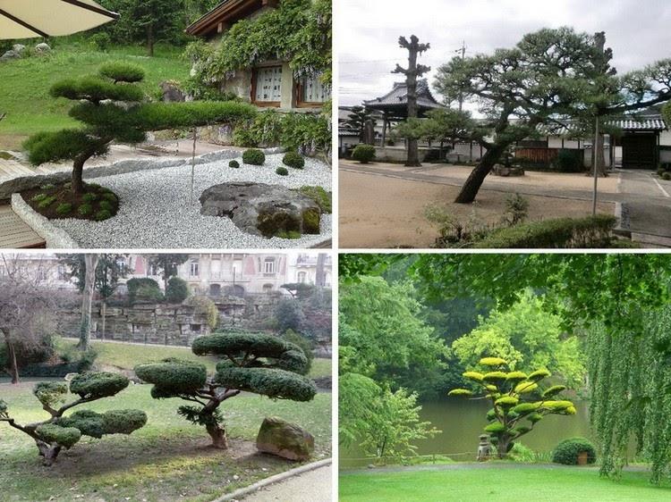 Бонсай: кусочек Японии в Вашем саду