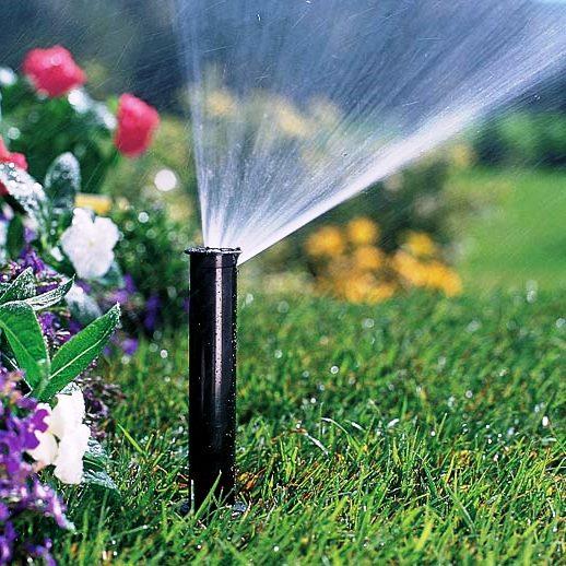 Как правильно поливать сад в жаркий период