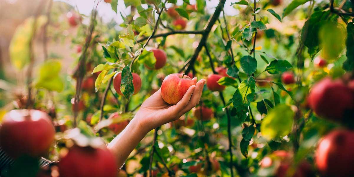 Осенние работы в саду: с чего начать