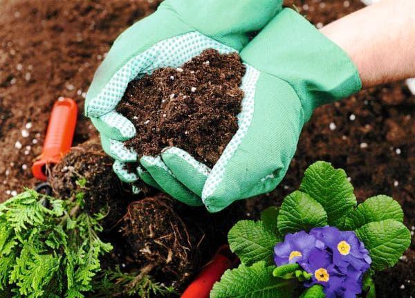 Чем подкармливать растения