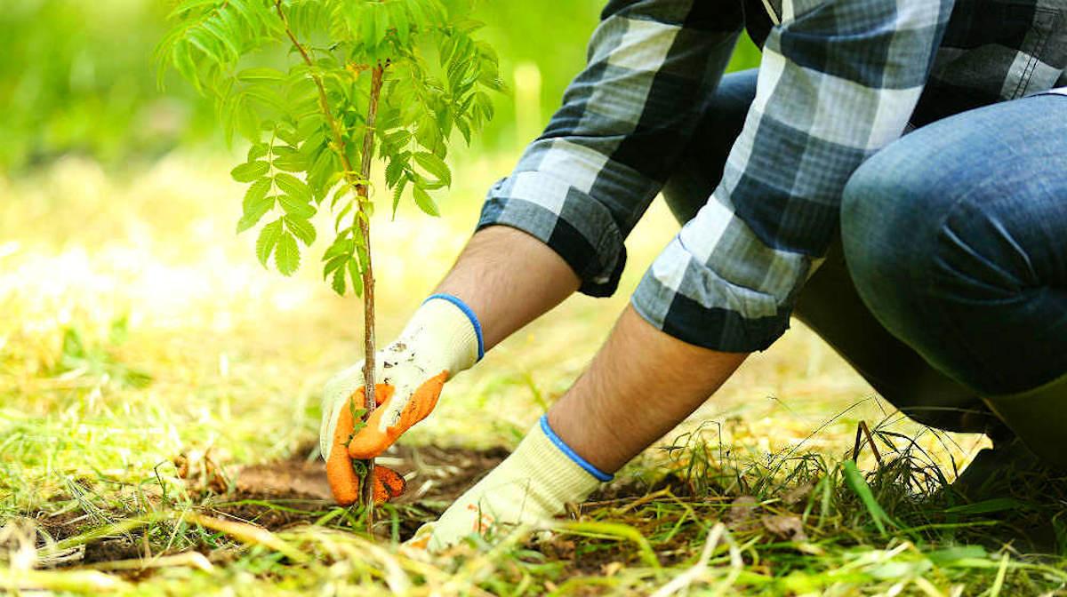 Как подготовить почву к высадке деревьев
