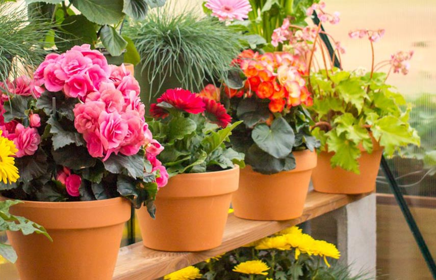 Хранение контейнерных растений зимой