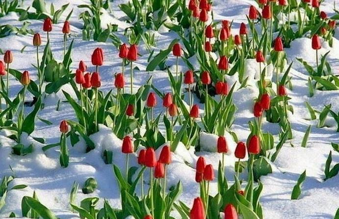 Зима - время выбрать растения для дизайна сада весной