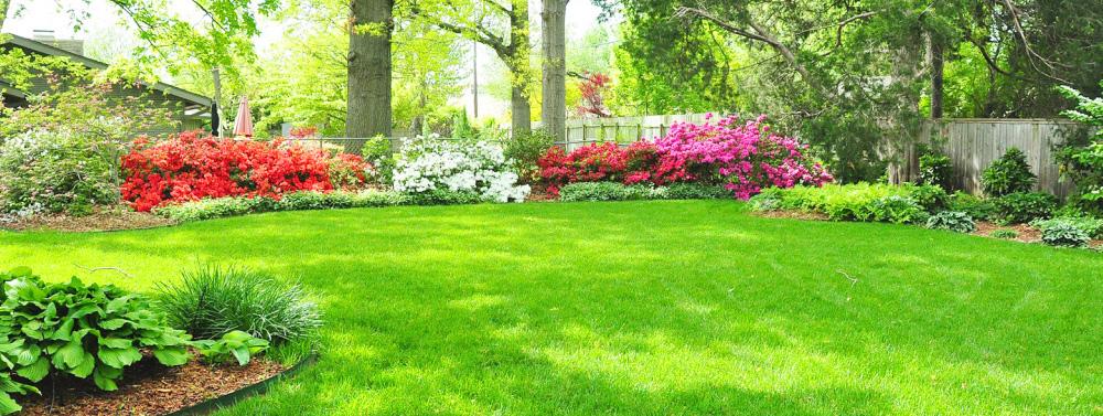 Выбор декоративных растений для сада