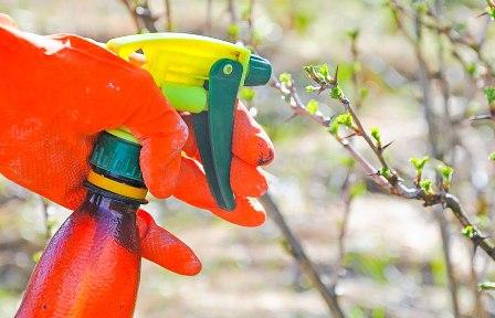 Первая обработка деревьев весной