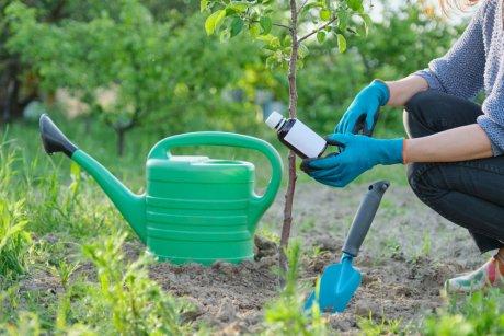 Подкормка плодовых деревьев в июле